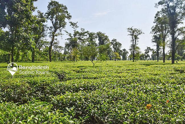 tourist spots in Bangladesh
