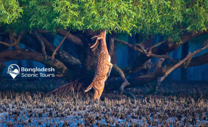 Sundarbans Safari, tourist spots in Bangladesh